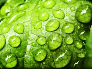 купить прилипатели оптом для пестицидов, гербицидов и фунгицидов