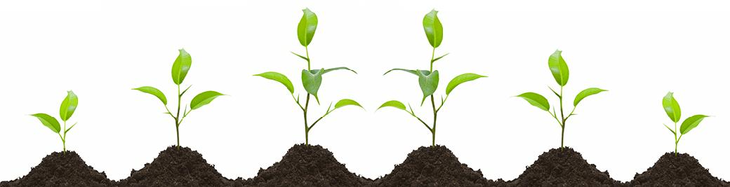 регуляторы и стимуляторы роста растений