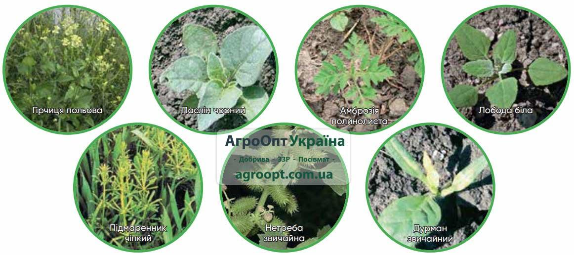 Спектр контролируемых сорняков гербицидом Гелиантекс