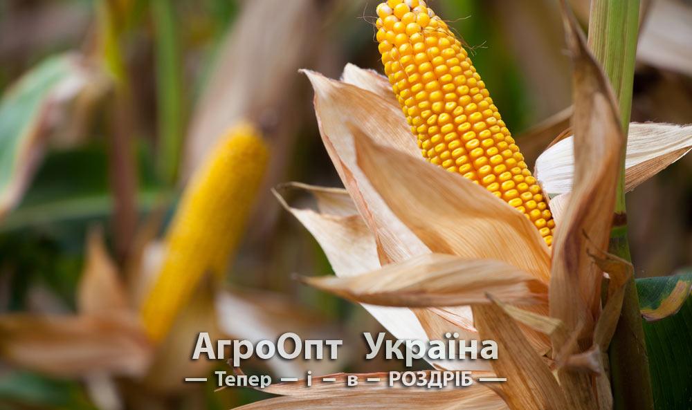 Ціна на гербіцид по кукурудзі