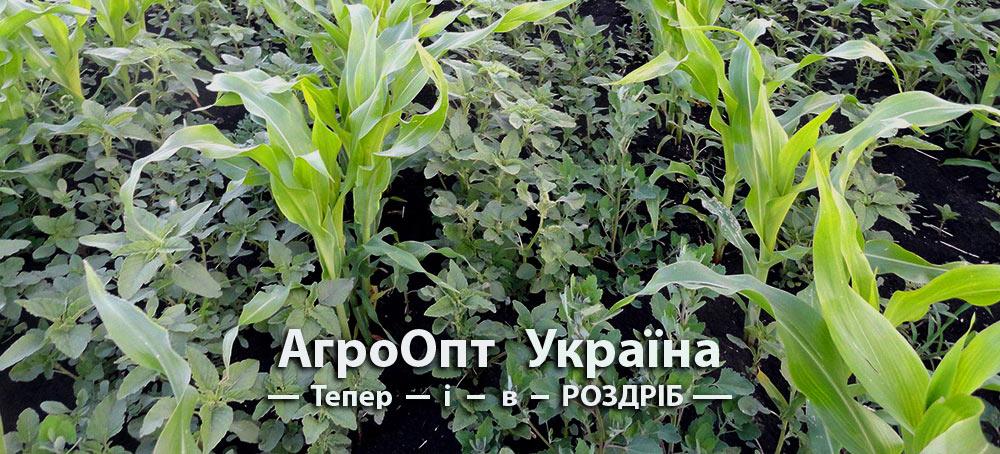 Купити гербіцид для кукурудзи